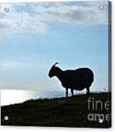 Sheep Silhouetted In Scotland Acrylic Print