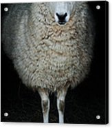 Sheep Acrylic Print by Stephanie Frey