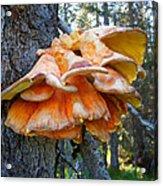 Shelf Fungus In Carl E. Wynn Nature Center In Homer-ak   Acrylic Print