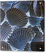 Shell Ballet Acrylic Print