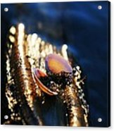 Shell By The River Acrylic Print