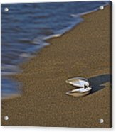 Shell By The Shore Acrylic Print