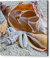 Shell Collectors Dream Acrylic Print