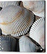 Shell Effects 5 Acrylic Print
