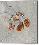Shell Jigsaw Acrylic Print