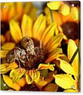 Shell Of A Bug On Flower Acrylic Print