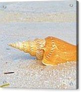 Shell On Beach Acrylic Print