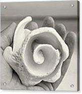Shell On Cozumel Acrylic Print
