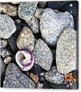 Shell On The Shore 1 Acrylic Print