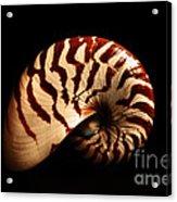 Shell Pose  Acrylic Print