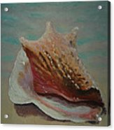 Shell Three - 3 In A Series Of 3 Acrylic Print by Don Young