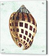 Shell Treasure-b Acrylic Print