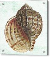 Shell Treasure-c Acrylic Print