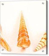Shell Trio Acrylic Print by Jean Noren