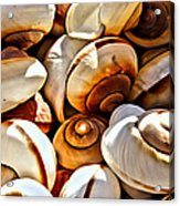 Shells Galore Acrylic Print