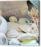 Shells In Pastels Acrylic Print