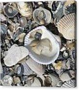 Shells In Shells 1 Acrylic Print