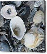 Shells In Shells 2 Acrylic Print