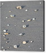 Shells On A Beach Acrylic Print