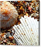 Shells On Sand Acrylic Print