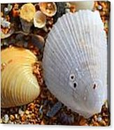 Shells On Sand2 Acrylic Print by Riad Belhimer