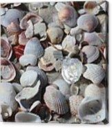 Shells On Treasure Island Acrylic Print by Carol Groenen