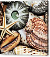 Shellscape Acrylic Print