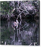 Shelter Beneath The Roots Acrylic Print