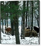 Sheltered In The Trees Acrylic Print