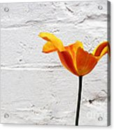 Seriously Orange - Sheltered Acrylic Print