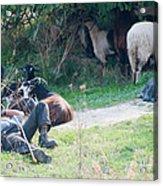 Shepherd's Rest Acrylic Print