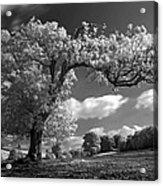 Shepton Tree Acrylic Print