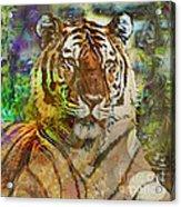 Shere Khan - Square Version Acrylic Print