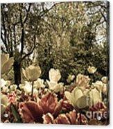 Sherwood Gardens 7 Acrylic Print