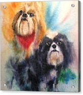 Shih Tsu Siblings Acrylic Print by Alan Goldbarg