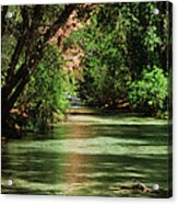 Shimmering Acrylic Print
