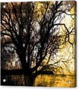 Shine In Twine  Acrylic Print