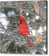 Shining Bright Red Acrylic Print