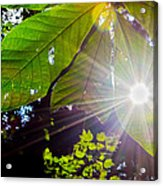Shining Through Acrylic Print
