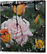 Shinning Roses Photo Manipulation Acrylic Print