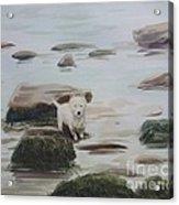 Shirley's Dog Acrylic Print