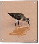 Shore Bird At Whitewater Draw Acrylic Print