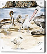 Shore Birds Acrylic Print