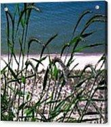 Shore Grass View Acrylic Print