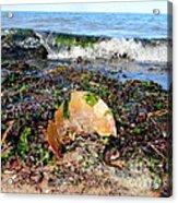Shore Scene Acrylic Print