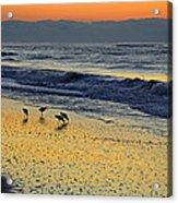 Shorebirds At Dawn Acrylic Print