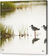Shorebirds At Dusk Acrylic Print