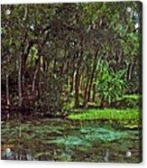 Shoreline. Rainbow Springs. Acrylic Print