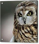 Short Eared Owl Portrait Acrylic Print