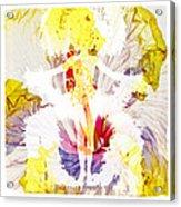 Show Girl Hibiscus Acrylic Print